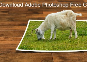 Don't Download Adobe Photoshop Free Cracks